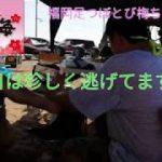 【足ツボ】Vol27初ギブアップビーチで足つぼ。福岡足つぼとび梅ちゃんねる
